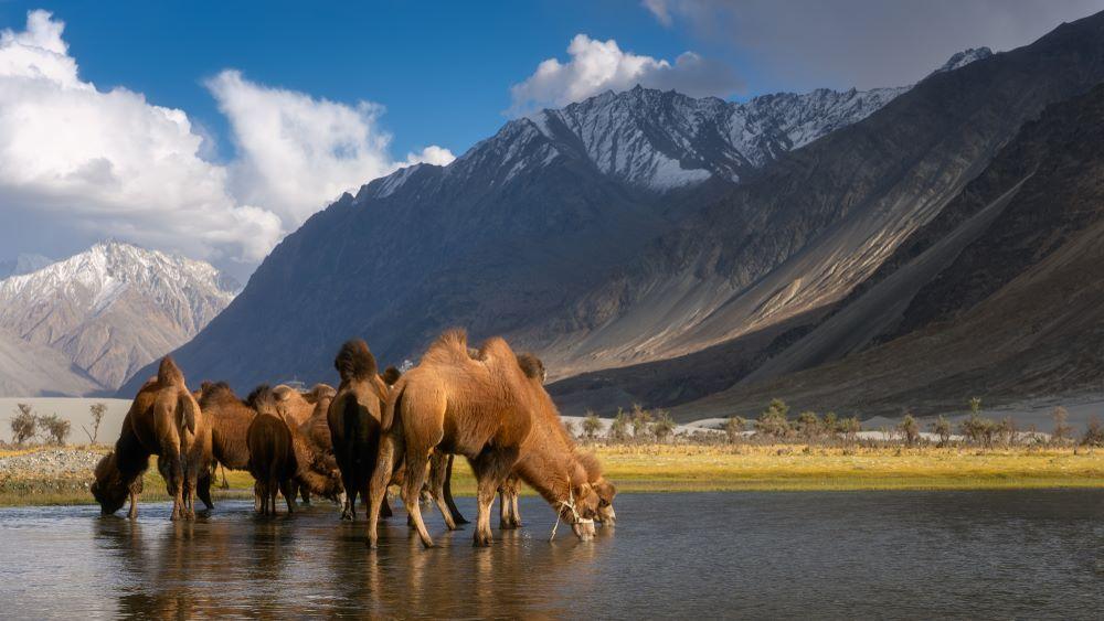 tourist attraction ladakh
